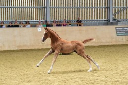 Walking on Sunshine Futurity