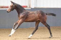 Felicify filly foal